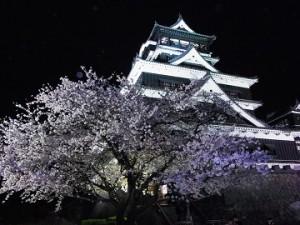 sakura-kumamoto1